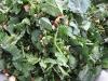 תערובת תבלינים עם ירוקים