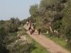 """סיור ליקוט ליד חוות """"הר יללת התנים"""", על הכרמל"""