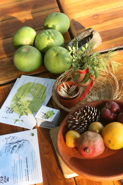 אורי מאיר-צ'יזיק, עקרונות בספיגה נבונה, תזונה נכונה, תזונה  טבעית, מזון בריא, מזון, איזון, פירות, בישול בריא, סנדא, קורס